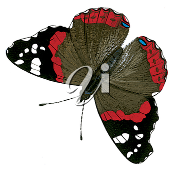 Royalty Free Clipart Image of a Red Admiral Butterfly