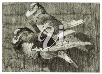 Royalty Free Clipart Image of Two Pigeons