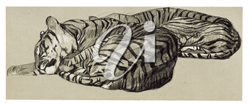 Royalty Free Clipart Image of Napping Tigers