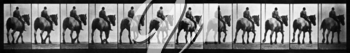 Royalty Free Photo of a Row of Horses and Riders