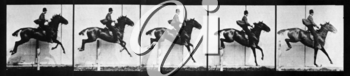 Royalty Free Photo of a Jumping Horse
