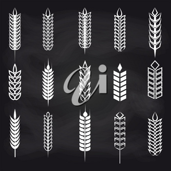 Wheat, rye and barley ear on chalkboard. Vector agriculture elements for farm, bakery, beer etc