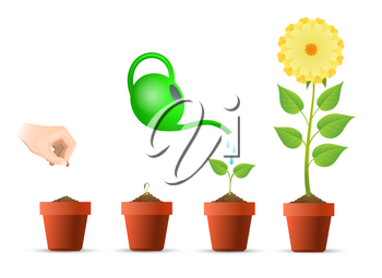 Planting stages. Plant growing phases in pot vector illustration, plantar growth processing concept