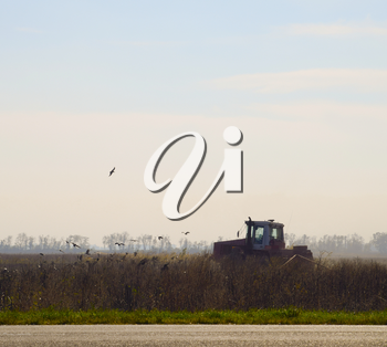 Tractor plowing a field and crows flying around him in search of food.