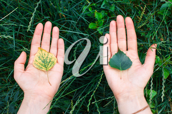 Yellow and green sprout in the palms of hands. The concept of conservation, ecology, environment