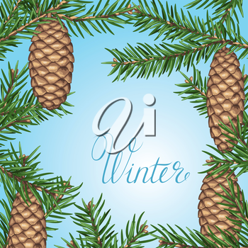 Background with fir branches and cones. Detailed vintage illustration.