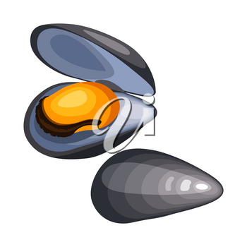 Mussels in shell. Isolated illustration of seafood on white background.