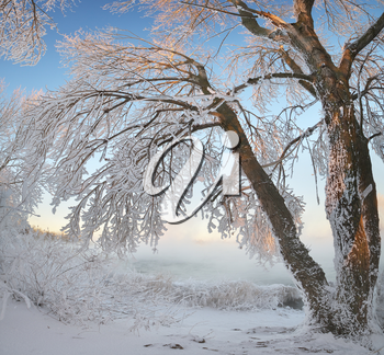 Winter panorama landscape. Composition of nature.