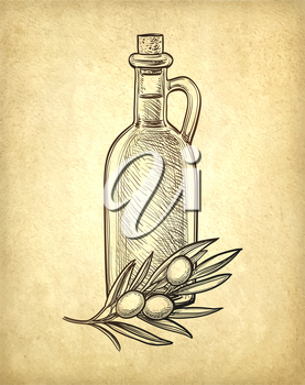 Bottle of olive oil and olive branch. Hand drawn vector illustration. Isolated on white background. Retro style.