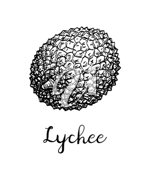 Ink sketch of lychee fruit. Isolated on white background. Hand drawn vector illustration. Retro style.