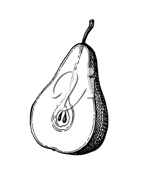 Pear cut in half. Ink sketch isolated on white background. Hand drawn vector illustration. Retro style.