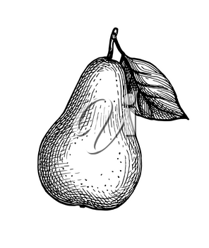 Pear. Ink sketch isolated on white background. Hand drawn vector illustration. Retro style.