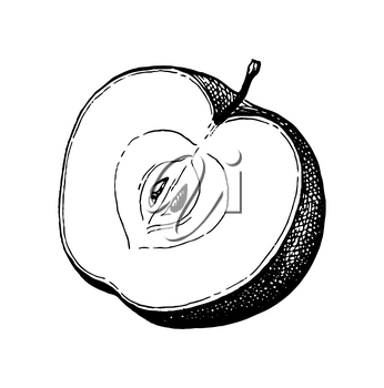 Sliced apple. Ink sketch isolated on white background. Hand drawn vector illustration. Retro style.