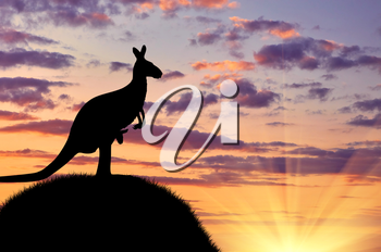 Silhouette of a kangaroo with a baby on a hill against a beautiful sunset