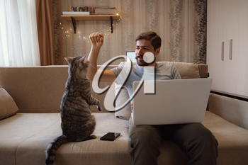 Young attractive smiling guy is browsing at his laptop, sitting at home on the cozy beige sofa at home, wearing casual outfit with his pet - gray cute cat