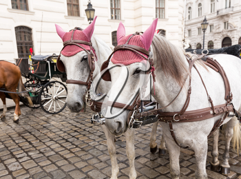 Pair of horses and carriage in front of the Hofburg Palace in Vienna, Austria