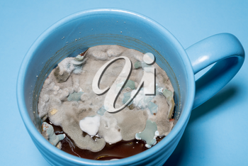 Closeup of mold and fungal spores growing on old gravy left in a coffee cup.