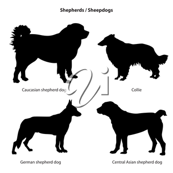 Dog breed silhouette. Pet icon set Sheped dog collection. Sheedogs
