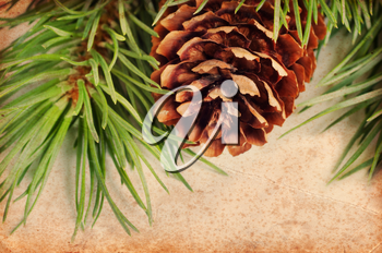 Pine cone and green branch