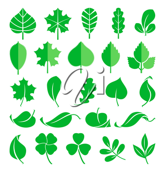 Growing plants. Leaf and grass shoots. Vector illustration in flat style. Nature green spring leaf, natural ecology flora leaf of set
