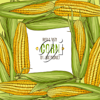 Colored background illustration with corn. Design template with place for your text. Corn organic vegetable in frame poster
