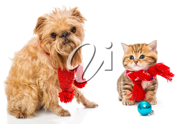 Dog and little kitten in scarf, isolated on white