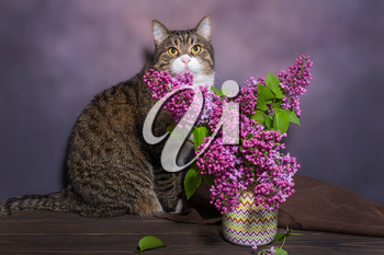 House cat and lilac on a wooden table