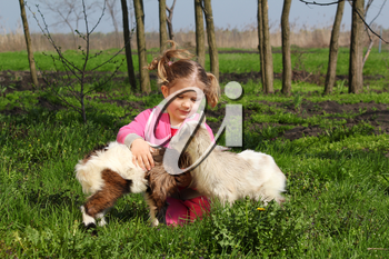 child play with two little goats
