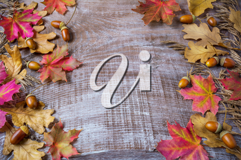 Thanksgiving  greeting background with rye, acorn and fall maple leaves. Thanksgiving seasonal background.  Fall background. Copy space.