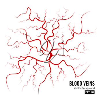 Human Blood Veins Vector. Blood Arteries Isolated On White. Blood Veins. Image Of Health Red Veins