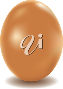 Large chicken egg of brown color on a white background.