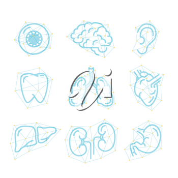 Set of futuristic outline icons of human organs isolated on white