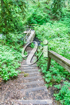 Steps lead from a trail to a platform over a stream at Flaming Geyser State Park in Washington State.