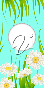Spring card of floral flowers dandelions and daisies, chamomiles, grass background