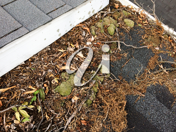 Leaves on rooftop with gutter clogging water on shingles