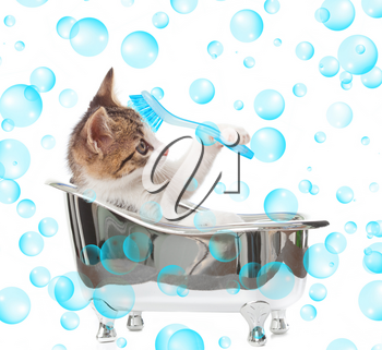 Puppy cat in the bathtub on white background