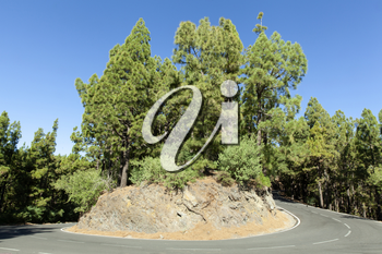 Beautiful scenic roads on Tenerife with green trees and blue sky