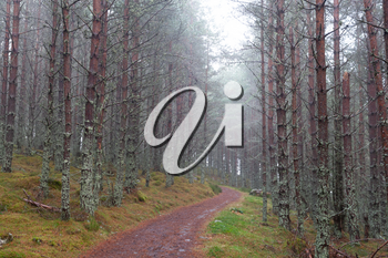 Autumnal forest in Cairngorms National Park showing a walking trail