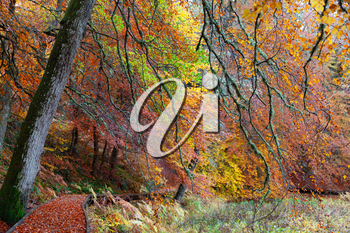 Cairngorms National Park: Path in Autumn forest full of different colors, Kincraig, Scotland, UK